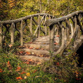 Enchanged Bridge by Pat Eisenberger - City,  Street & Park  City Parks ( tree, wood, autumn, fall, forest, bridge, branches,  )