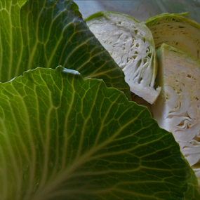 Oh The Green Cabbage! by Liz Pascal - Food & Drink Fruits & Vegetables (  )