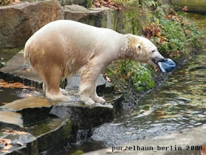Photo: Knut holt kraeftig Schwung ;-)