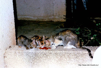 Photo: En kort daarna haar kinderen! | And shortly after her kittens!