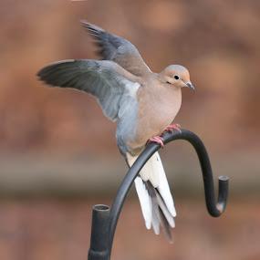 by Elaine Hill - Animals Birds (  )