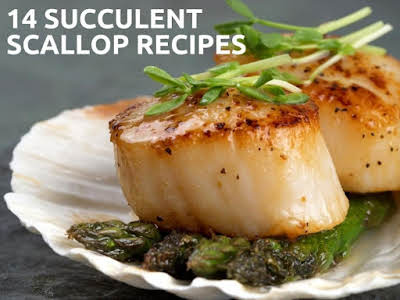 14 Succulent Scallop Recipes