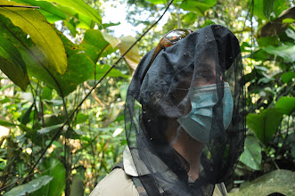 Photo: It is essential to protect the gorillas from any human diseases by wearing a mask. The net is to keep insects off one's face.