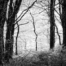 Photo: Exmoor Woodland (© Clive Haynes)