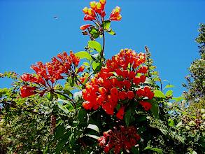 Photo: Blüten auf 3400 m