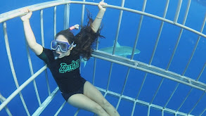 Swimming with Sharks thumbnail
