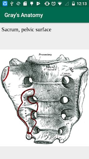 Grays anatomy atlas