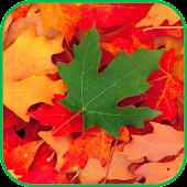 Fall Leaves Live Wallpaper 4K
