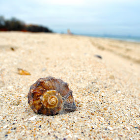 Shell by Alex Alex - Artistic Objects Other Objects ( shell, sand, black sea, sea, tilt shift )