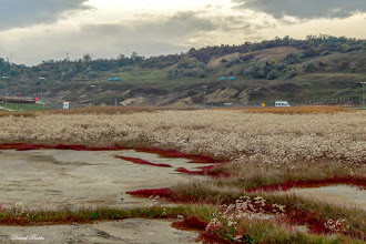Photo: Turda - Durgau-Valea Sarata  - 2014.10.15 - foto Daniel Borbe, pe Facebook - Situl Natura 2000-Sărăturile Ocna Veche-Turda https://www.facebook.com/daniel.borbe.7/media_set?set=a.752927641411706.1073741920.100000834303675&type=3