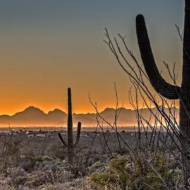 Desert Sunset by Richard Michael Lingo - Landscapes Sunsets & Sunrises ( saguaro national park, arizona, sunset, desert, landscape )