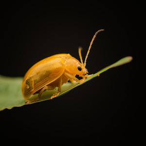 Yellow Bug Face 04.jpg