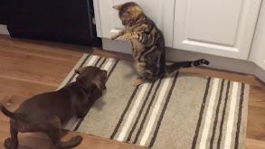 Cats vs. Dogs thumbnail