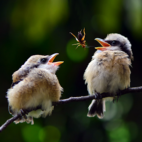 by Ajar Setiadi - Animals Birds