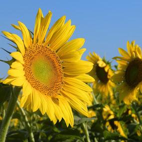 by Melissa Bieri - Flowers Flower Gardens