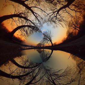 Magic Forest by Dunja Milosic Odobasic - Digital Art Places