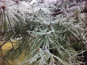 """Photo: 2/5 - Ice storm! We got 10 1/2"""" of snow on the evening of 2/12 - then another 2"""" on 2/13."""