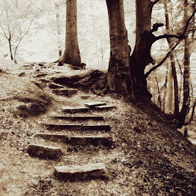Stairway to autumn by Miro Polča - Landscapes Forests