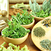 Herbs and Use (Offline) icon