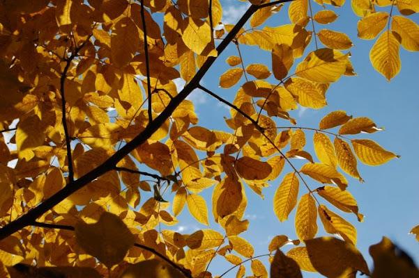 Autumn'sColours di NuvolaForesta