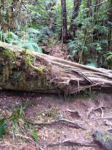 Photo: Para llegar a la cima de Gunung Pangrango hay que sortear un montón de árboles caídos.