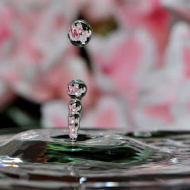flowers in waterdrops by Paul Wante - Abstract Water Drops & Splashes ( pink, waterdrops, abstract, splash, photography )