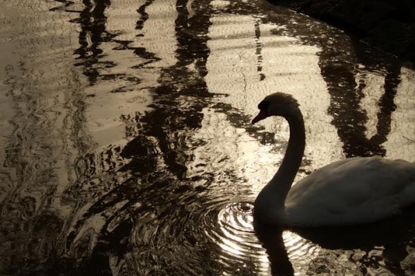 L'incantesimo del lago di Primiera