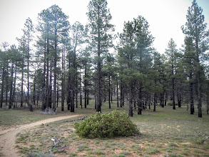 Photo: The flat approach trail to North Guardian Angel
