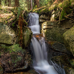 Lost Stream by Martin Namesny - Landscapes Waterscapes ( in the forest, water, stream, bourn, fall, waterfall, forest, leaves, stones, forgotten, light, river )