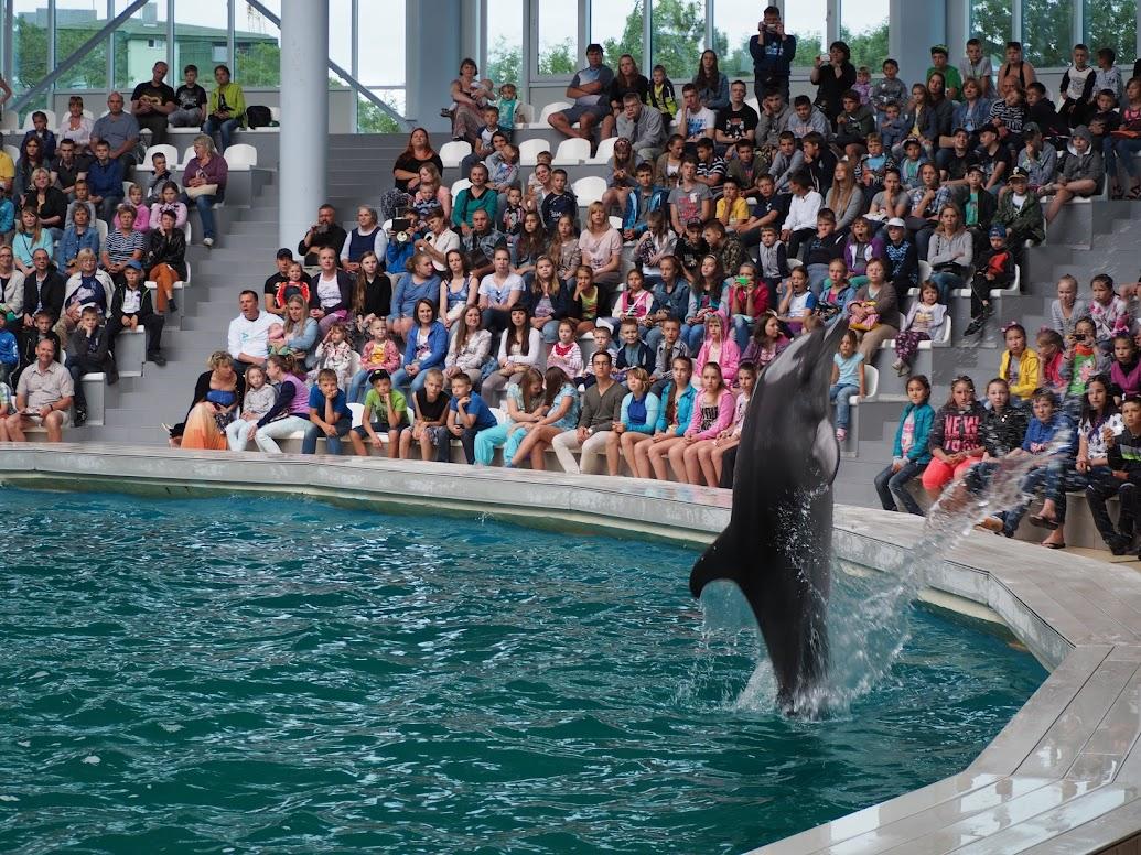 прыжки дельфинов из воды