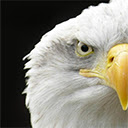 Eagle Wallpapers Theme New Tab