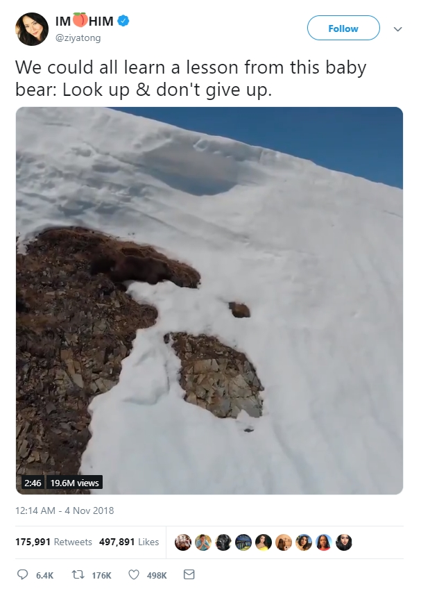 Đoạn clip chú gấu con leo núi truyền cảm hứng cho hàng triệu dân mạng với thông điệp Đừng bao giờ bỏ cuộc nhé!!! - Ảnh 4.