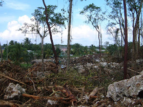 Photo: 2002 Ridge cleared for housing, Ironwood Forest, Grand Cayman,  (July St, Windsor Park) Dec. 22, 2002 http://www.caymannewsservice.com/science-and-nature/2012/09/11/orchid-100-critical-species