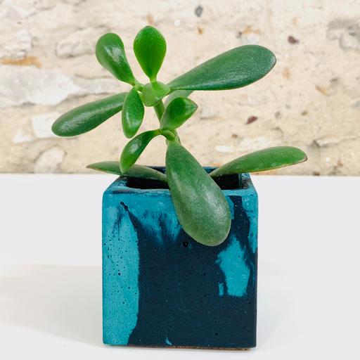 pot en béton marbré bleu turquoise et bleu pétrole avec succulente