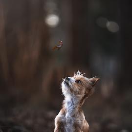 Pooch by Geraldine Enslin - Uncategorized All Uncategorized ( portraiture, love, fluffy, pet, dog portrait, cute, dog, photography, animal )