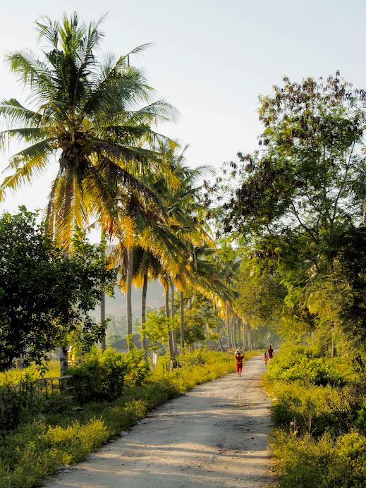 Sumba rural scenery