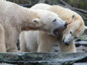 Photo: Knut nimmt Kontakt auf ;-)