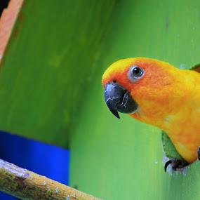yellow by Dhannie Setiawan - Animals Birds ( bird, green, yellow, cute, animal )