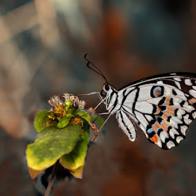 Butterfly by Farid Wazdi - Animals Insects & Spiders