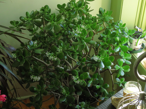 Mes petites plantes grasses et cactées - Page 3 R2YO4WG64ij8lZ-WivLZ_K1-E16hCtsgxrkPjUHWNIGjHwzfB2DAiuJVCvszBqO5sAG0iarChvaozqHax-VaAWaKBoKK4Sn95gob-ETbWMjriL6LRRBLbF7H2YlQVtBz0pCzTAa4F9w