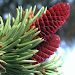 iForest - Trees and shrubs icon