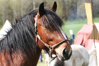 Photo: Det var gott om hästar lite här och var, stiliga djur!