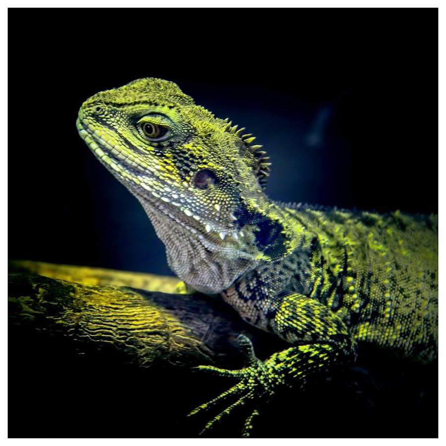 by Denis Smit - Animals Reptiles (  )