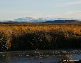 Photo: Near the mouth of the Blitzen River, Steens Mtn backdrop