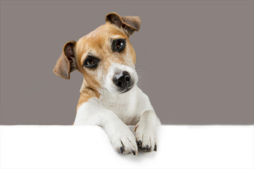 Ask Wendy: Scammed over a fake puppy