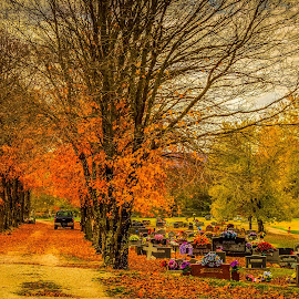 by Jennifer  Loper  - City,  Street & Park  Cemeteries ( flowers, fall colors, tombstones, clouds, cemetery, trees )