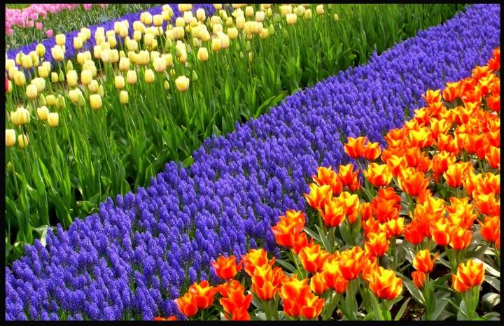 Arcobaleno floreale di giuseppe46