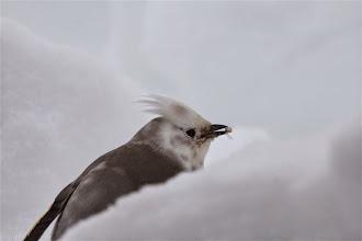 Photo: Kuva-17b, tilhi 2kv (helmikuu) kuvaaja Timo Talala