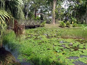 Photo: Cayenne - Botanical Gardens