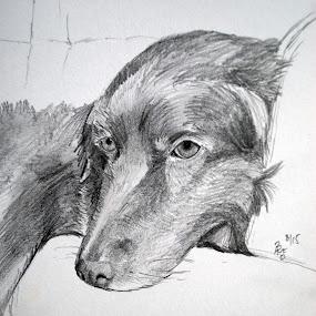 Flatcoated Retriever by Anika McFarland - Drawing All Drawing ( black dog, flatcoated retriever, pencil drawing, dog, drawing,  )